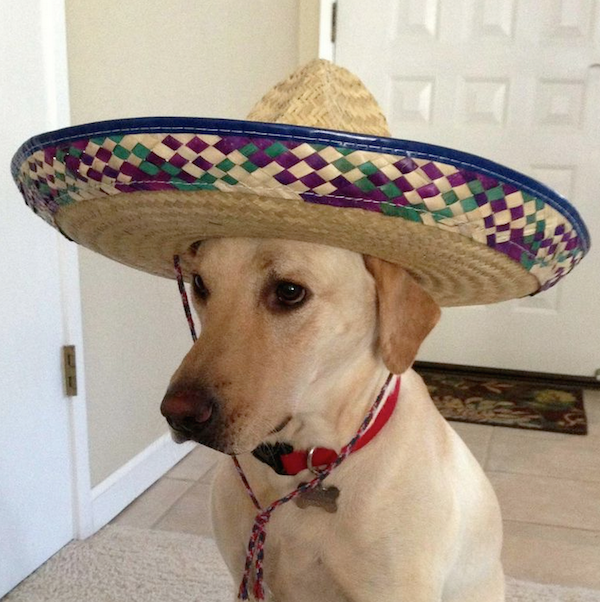 Scott's dog wearing a sombrero